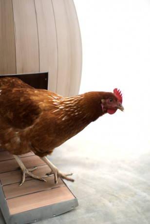 pollaio