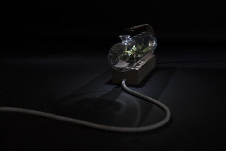 micro serre per piante in miniatura