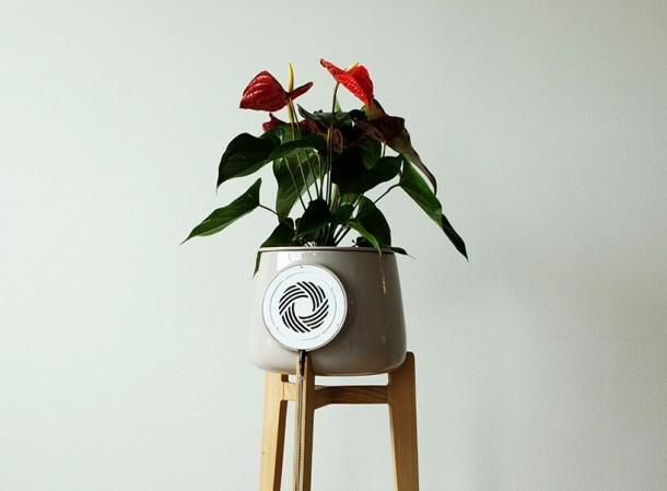 Clairy, il vaso che purifica l'aria
