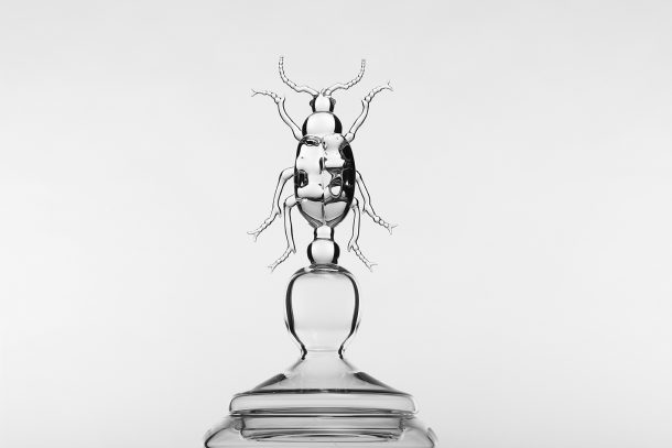 vasi insetto tappo