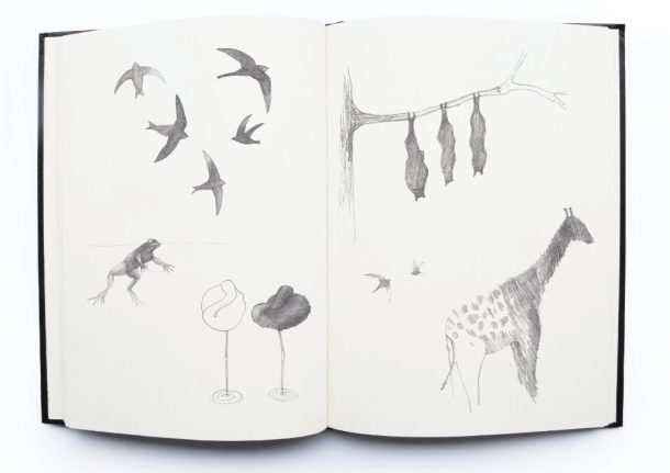 Front Design Studio: schizzi di animali
