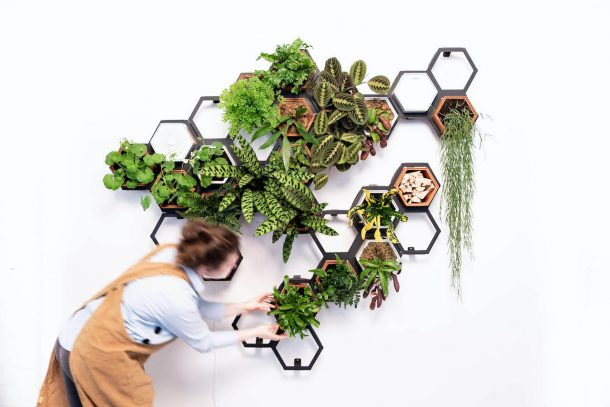 Horticus living Wall